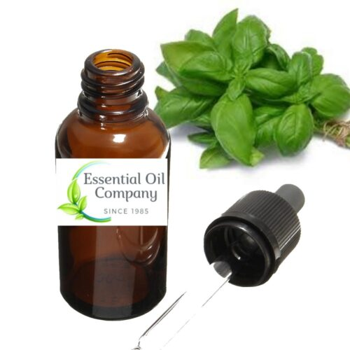Basil Sweet Essential Oil India - Manufacturer & Exporter