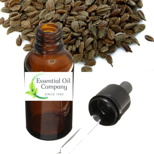 Manufacturers and Exporters of Carrot Seed Essential Oil India