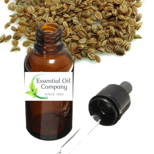 Celery Seed Essential Oil Manufacture Buy Wholesale