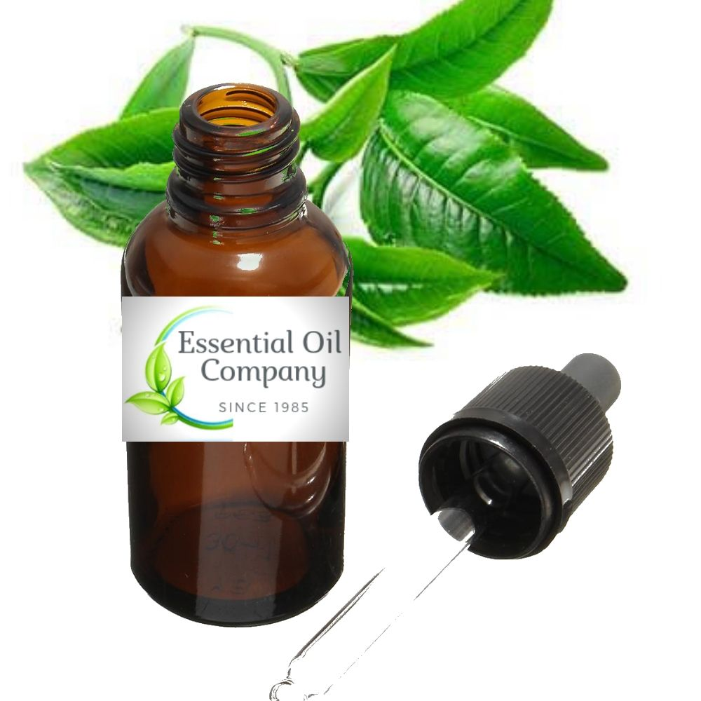 Wholesale Tea Tree Essential Oil Manufacturer India