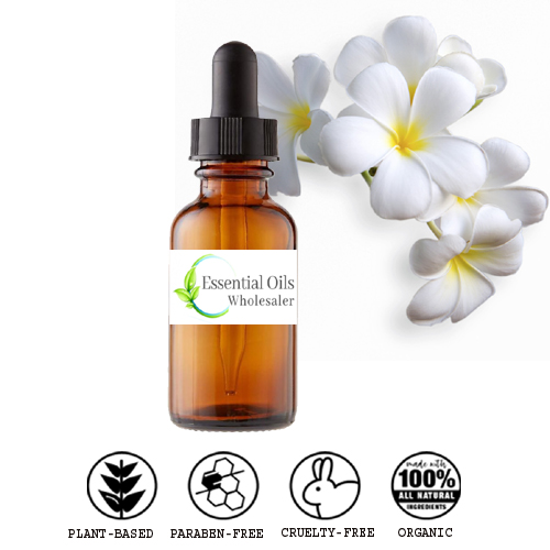 buy frangipani floral absolute oil wholesale